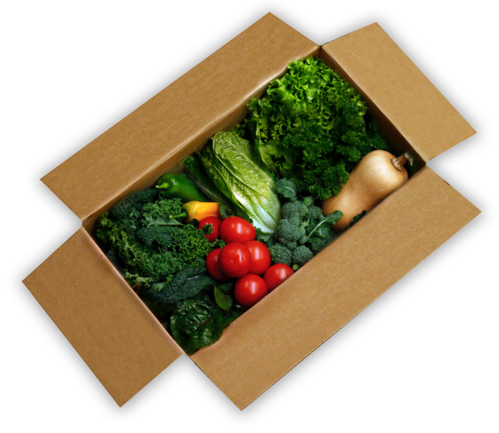 clevedon vegetable box