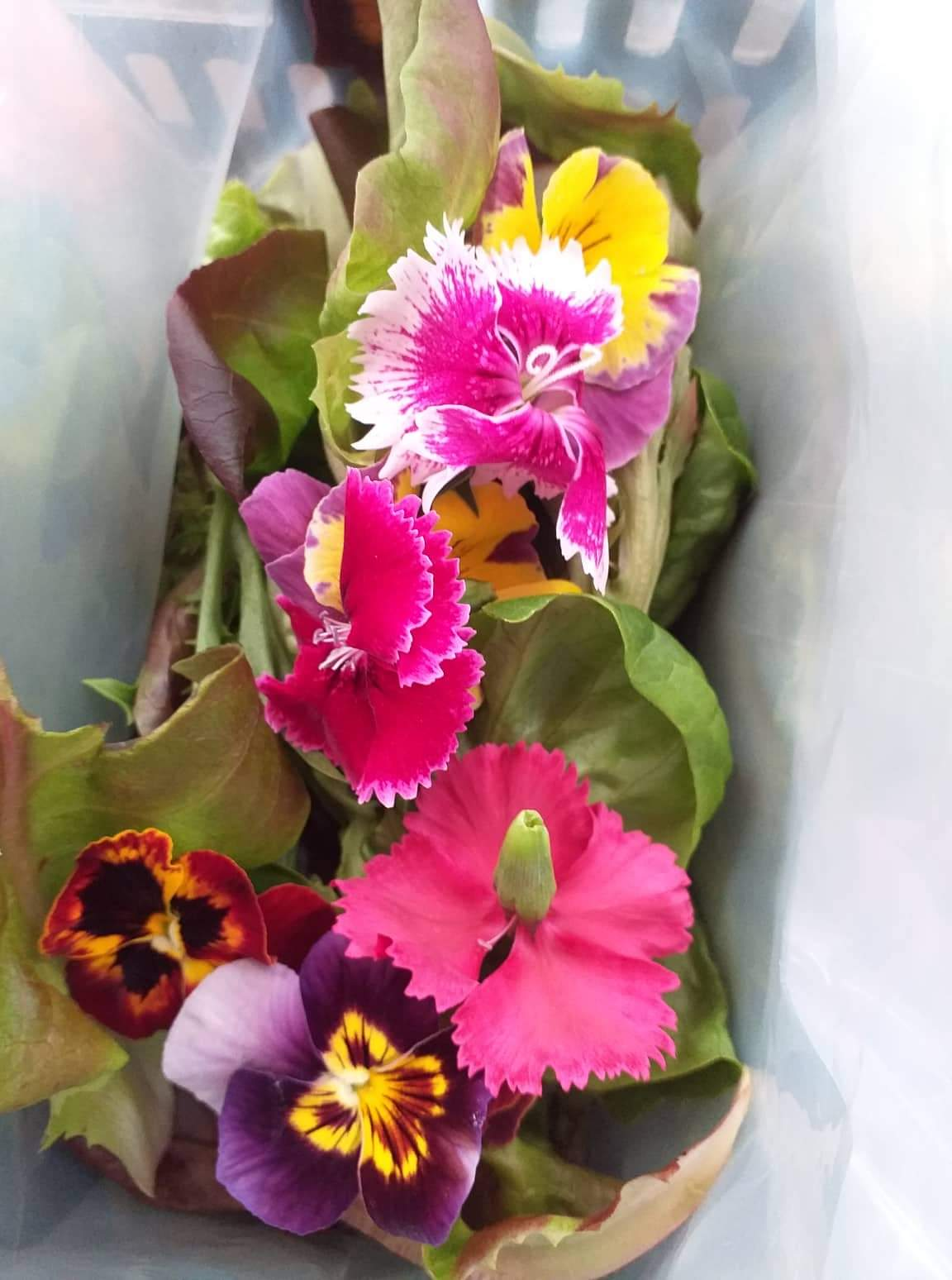 Salad Mix with Edible Flowers