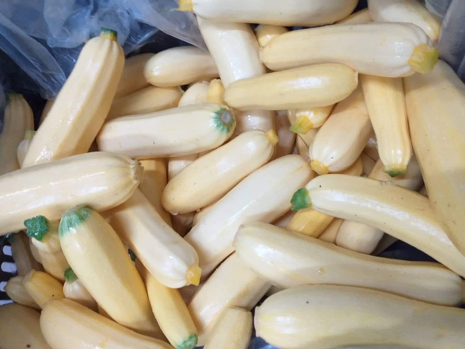 Courgettes - Yellow